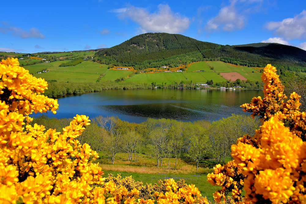 Yellow Gorse Framing Loch Ness in Scottish Highlands, Scotland<br /> The dominate colors of the Scottish Highlands in spring is green with dashes of yellow. No, not from the sun but from gorse.  This prickly shrub seen here framing Loch Ness grows wild in patches along roads and hillsides.  A Fabaceae cousin to the common gorse is broom. The latter has similar, bright yellow flowers yet a smooth stem.  To a tourist&rsquo;s eye, both plants add a delightful accent to the countryside.  To residents, they are an invasive weed.