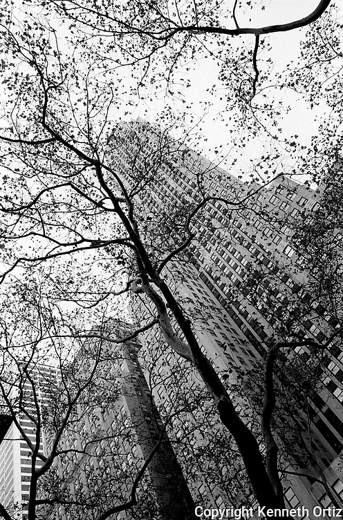 Looking up through trees by the New York Library.