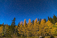 The Big Dipper over moonlit aspens in full fall colour, at Elbow Falls, Kananaskis, Alberta, in September 2015. Illumination is from a waxing gibbous Moon. <br /> <br /> This is a single 15-second exposure at f/2.5 with the 24mm lens and Nikon D750 at ISO 800.