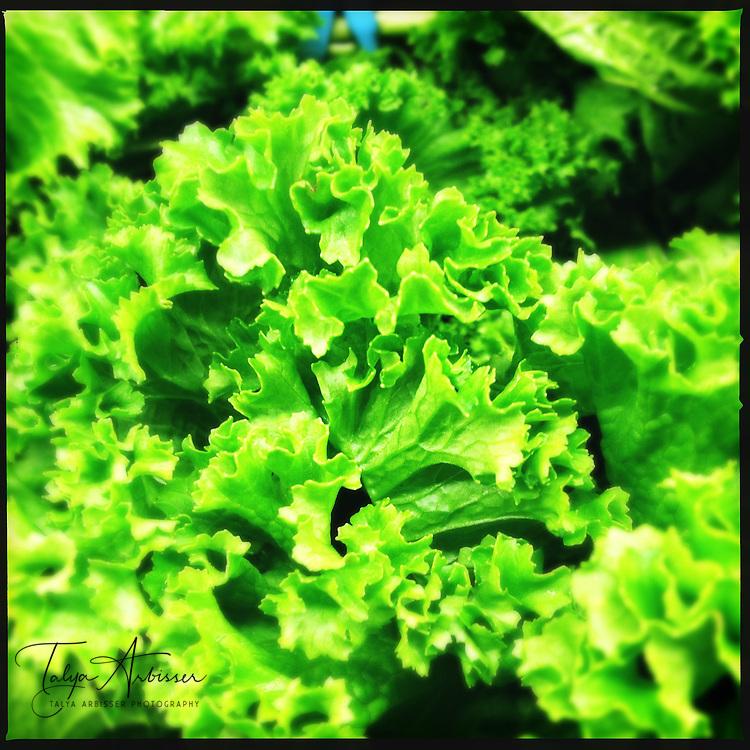 Lettuce - Houston, Texas