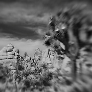 Joshua Tree Blur - Lensbaby - Infrared Black & White