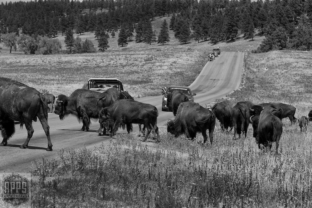 2012-Custer State Park,  South Dakota.