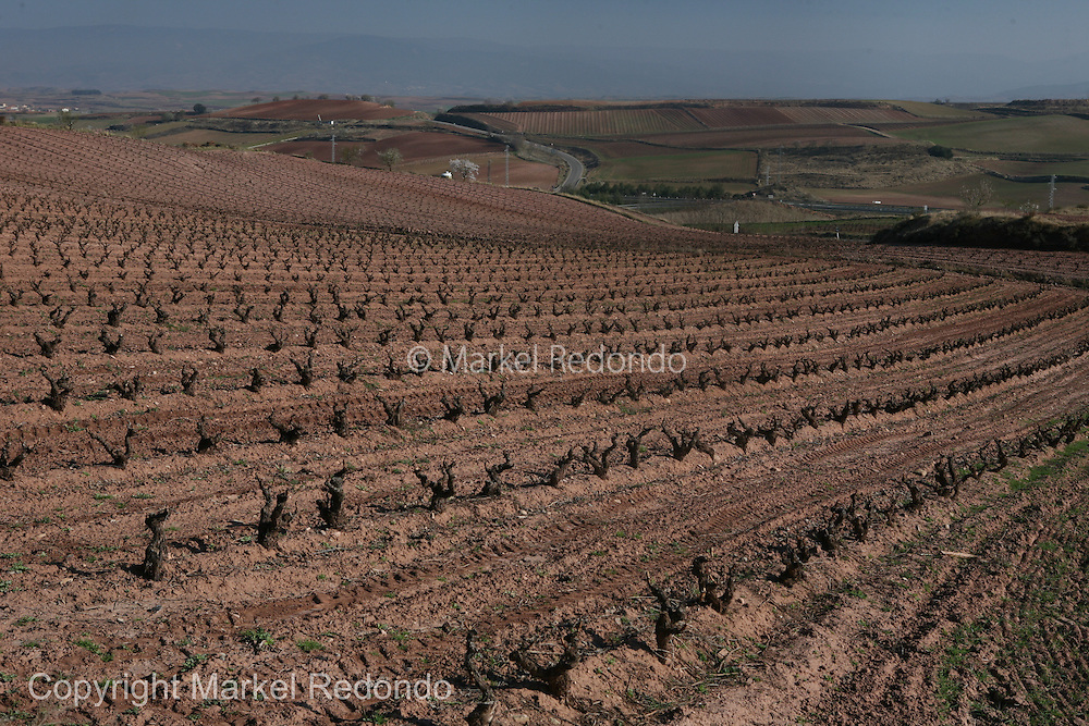 Rioja Vineyards, Spain.