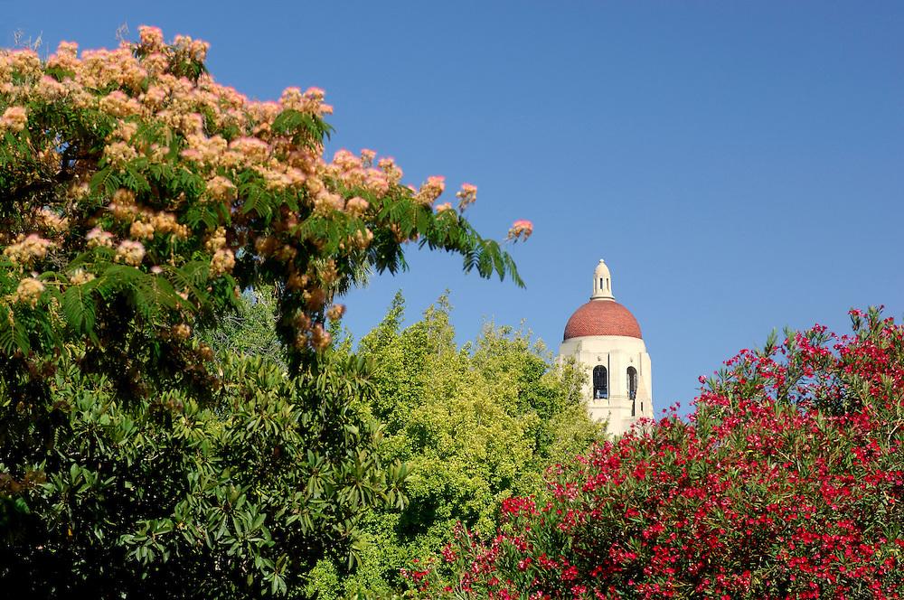 Stanford University, Palo Alto, San Francisco Area, California, United States of America