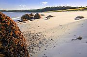 0902-1017 Mile-long Great Beach, Roque Island, Maine.