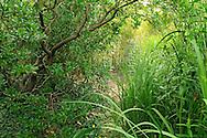 France, Languedoc Roussillon, Hérault, Assas, le jardin de Jean-Jacques Derboux, jardin d'inspiration japonaise