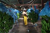 Costa Rica: COOPETRABASUR Fairtrade Bananas