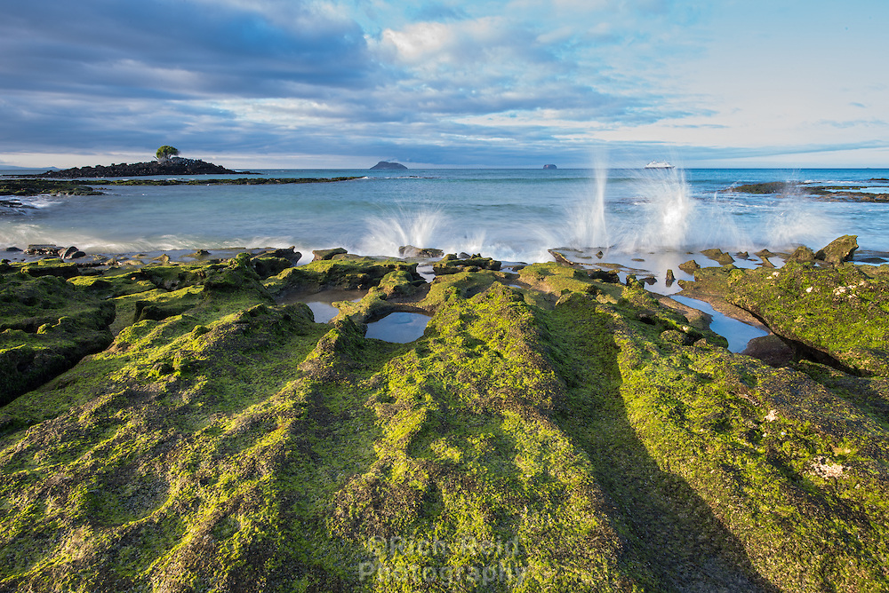 Waves breaking on algae covered lava rocks at Las Bachas Beach on Baltra Island in the Galapagos, Ecuador.