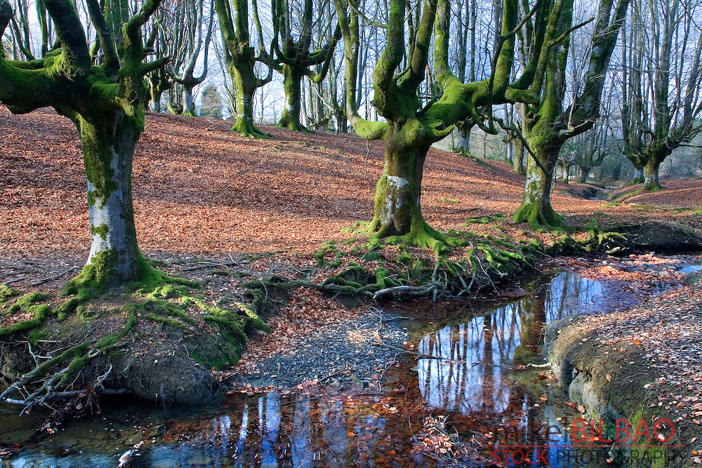 Otzarreta beechwood forest. Gorbea Natural Park. Biscay, Basque Country, Spain.