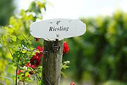 Wine region, Niagara, Ontario, Canada