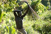 Un jarawa à la chasse. Pour chasser les daims et les cochons sauvages, les Jarawas encerclent peu à peu leur proie. Celle-ci est tuée d'une seule flèche.