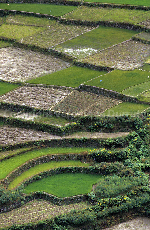 RICE FIELDS IN THE CORDILLERA. NORTH LUZON, THE PHILIPPINES