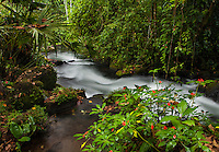 a stream flowing through the rainforest at la carolina lodge in Costa Rica