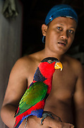 Local person &amp; Black-capped Lorikeet (Lorius lory) as pet<br /> Biak Island<br /> West Papua<br /> Indonesia