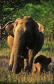 Sri Lankan Wildlife and Nature