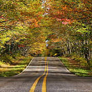 &quot;Lineage&quot;<br />