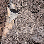 Ancestral Puebloan people chipped figures and shapes into the desert varnish (oxidized surface) of 200,000-year-old volcanic basalt rock, here on the Mesa Point Trail, in Boca Negra Canyon, in Petroglyph National Monument, Albuquerque, New Mexico, USA. Archeologists estimate the 23,000 petroglyphs in the monument were created between 1000 BC and AD 1700.