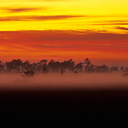 Early morning fog in the swamps of Everglades National Park, FL.