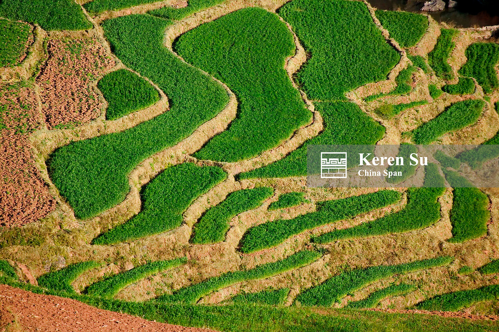 Pattern of red soil land and green winter wheat land, Dong Chuan, North Yunnan, China
