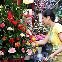Asia, China, Chongqing. Local flower market scene in the city of Chongqing.
