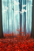 Surreal forest scnery - manipulated photograph