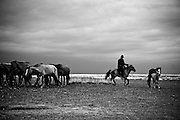 A herdsman rounds up his horses at dusk in rural Mongolia.