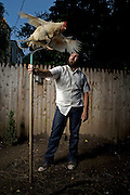 Urban Farmer Matt Fouse with his chickens in his Baltimore backyard Monday, September 12, 2011.