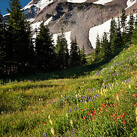 OR01689-00...OREGON - Mount Hood and Barrett Spur from the wildflower covered meadows of Elk Cove in the Mount Hood Wilderness Area.