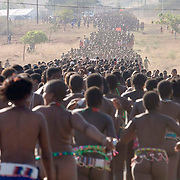 Thousands of girls sing and dance up to the Zulu royal palace in Nongoma, KwaZulu Natal, South Africa Sept 8, 2007. Thousands of virgin girls attend the annual Reed Dance at the Enyokeni palace from which the Zulu King Zwelethini may choose a bride. Photo Greg Marinovich / Bloomberg News