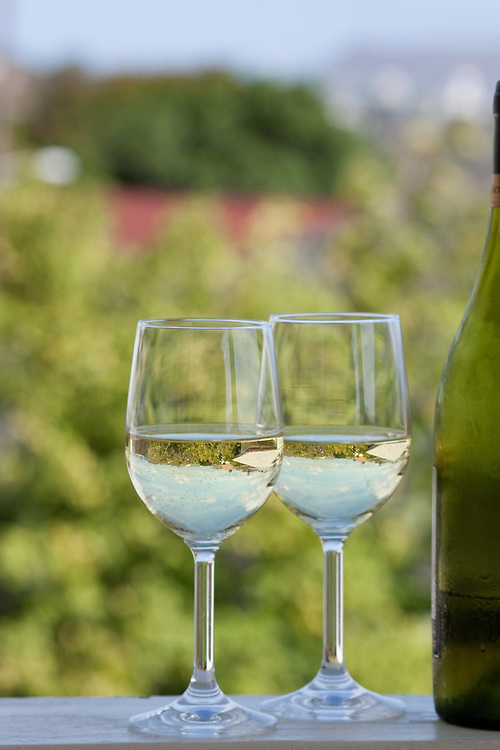 Two glasses of white wine against a vineyard in the background
