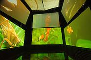 Salas Biomuseo_VM