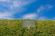 Basketball Court, 9 Fordune Dr, Southampton, NY, Long Island