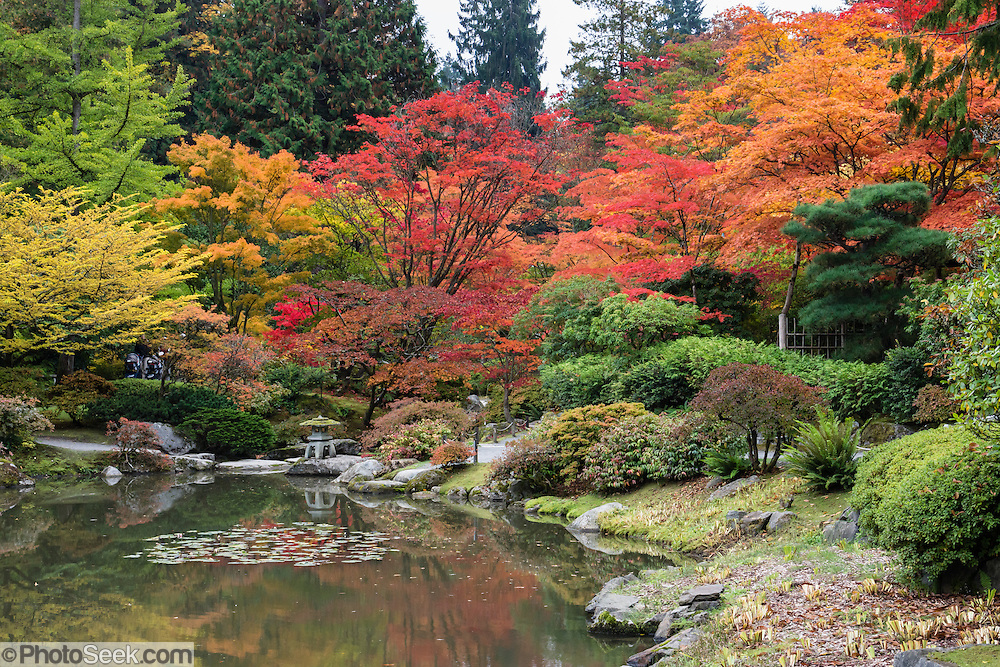 Fall foliage colors pond seattle japanese garden for Japanese garden colors