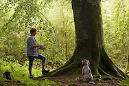 Dog walking, Countesswells and Foggieton, Aberdeenshire and Moray District, Forestry Commission, Scotland