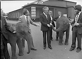 1979 - Baby Elephants At Dublin Zoo.   (M82).