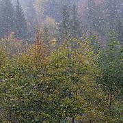 snow falling, autumn, seasons changing, first snowfall, Romania.