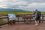 One young male photographer with a large telephoto lens on a tripod photographing birds at Potter Marsh, Anchorage, Alaska