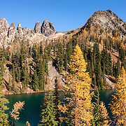 Golden Larch trees (Pseudolarix amabilis) at the peak of their fall color line Blue Lake and several peaks near Washington Pass in the North Cascades of Washington state. Golden Larches, while not considered true larches, are known for shedding their needles each fall. The needles grow back each spring and transition from deep green to blue green over the course of the summer. In late September or early October, the needles turn golden and drop, just like the leaves on deciduous trees. Of the mountains in the cluster at left, Liberty Bell Mountain is the leftmost peak; the Early Winters Spires are the tight cluster of three peaks at the center of the mountains shown.