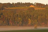 Penner-Ash estate vineyards, Yamhill-Carlton AVA, Willamette Valley, Oregon