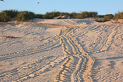 Turtle tracks on the Lacepede Islands, on the Kimberley coast the northwest of Broome.