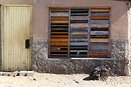House and turkey in La Bajada, Pinar del Rio, Cuba.