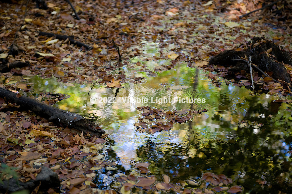 Fallen leaves on a pond
