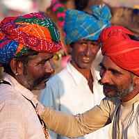 Camel Trading at the Pushkar Camel Fair in India
