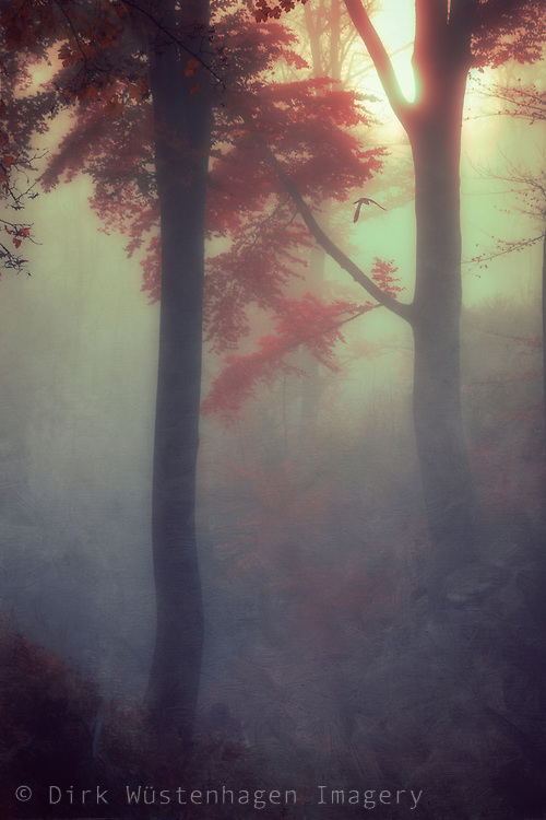 Dreamy sunrise n a misty forest - textured photograph<br />