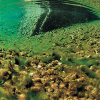 Underwater view of the Parrisal de Beceite, an wonderful walk next to the river Matarrana, a changing riverand with beautiful flora and fauna around it.