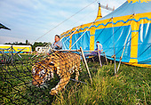 Tiger Circus Attractions