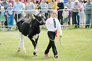 The Angus Show, Brechin, Saturday 8th June, 2013. Young handler in the parade of stock