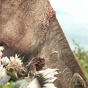 Rovdyrskader reinsdyr