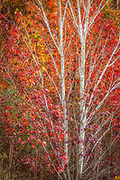 Colorful autumn leaves and bare branches create a fall pattern.