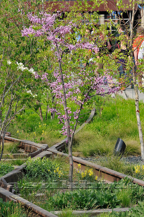 Blossom on High Line Park